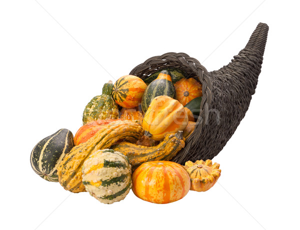 Cornucopia Gourds isolated with clipping path Stock photo © danny_smythe