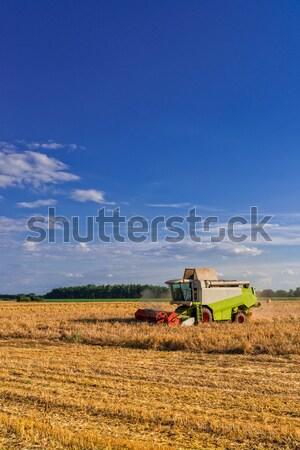 収穫 風景 地球 フィールド 小麦 トウモロコシ ストックフォト © Dar1930