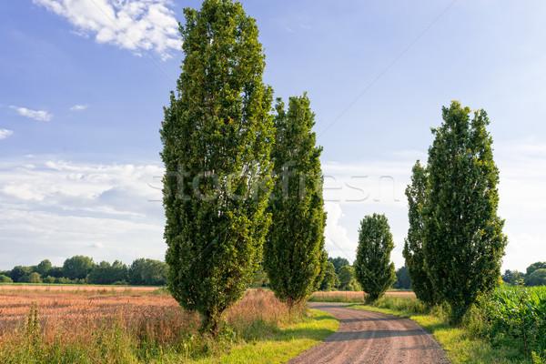 walking ways in Germany Stock photo © Dar1930