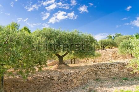 оливками вкус подобно солнце трава закат Сток-фото © Dar1930