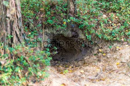 Fox hole Stock photo © Dar1930