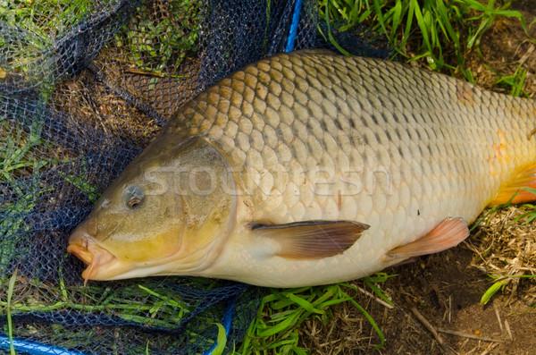 Karp słodkowodnych ryb trawy człowiek charakter Zdjęcia stock © Dar1930