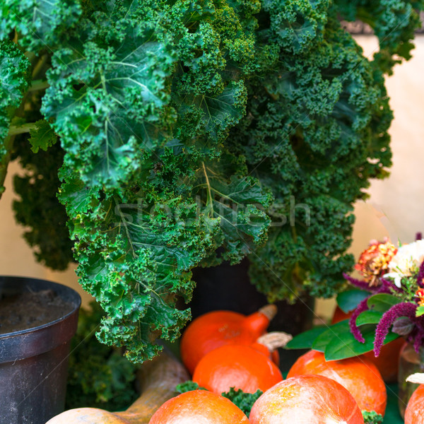 Oldenburg Kale Stock photo © Dar1930