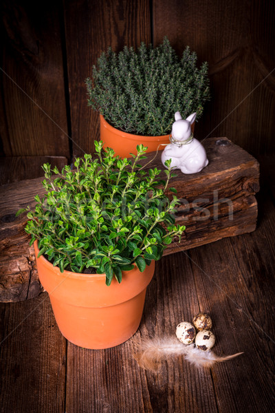 thyme and oregano Stock photo © Dar1930