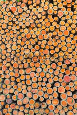 Wood pile Stock photo © Dar1930