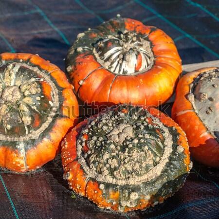 Turban miąższ charakter owoców pomarańczowy zielone Zdjęcia stock © Dar1930