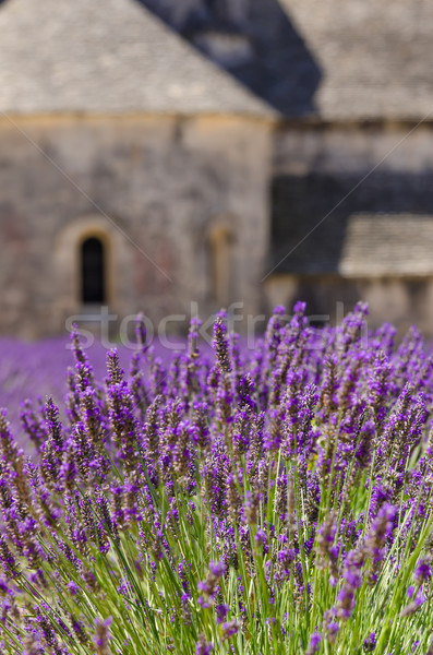 Monasteries of the Cistercian Stock photo © Dar1930