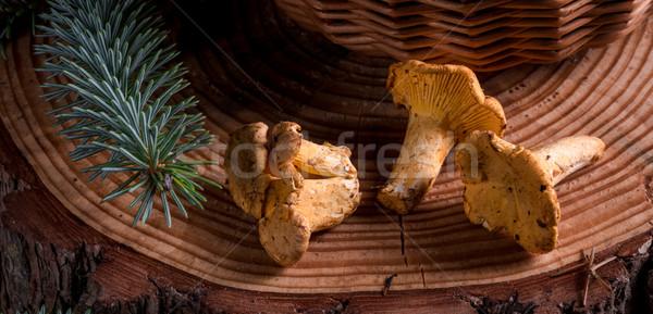 Bos natuur zomer oranje witte plantaardige Stockfoto © Dar1930