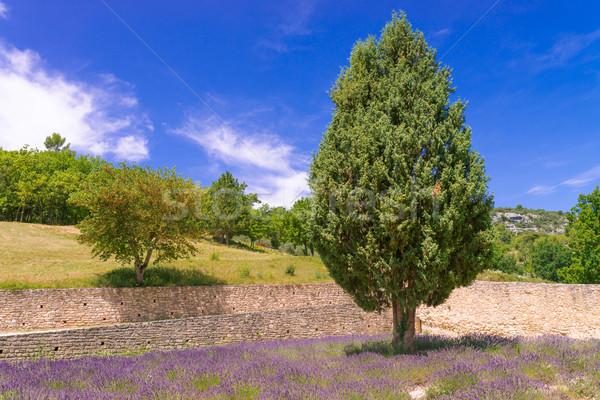 Flor árvore natureza paisagem viajar cor Foto stock © Dar1930