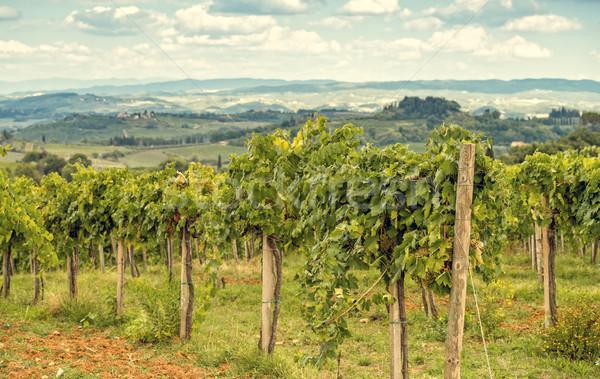 Toscano uvas vinho campo viajar fazenda Foto stock © Dar1930