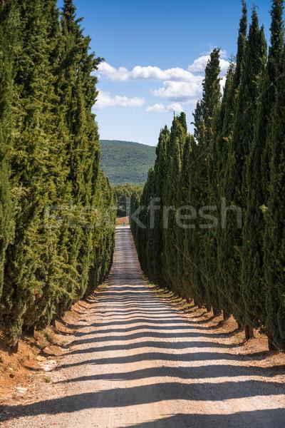 Cyprys wody drzewo lasu morza ogród Zdjęcia stock © Dar1930