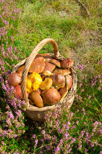 basket with mushrooms Stock photo © Dar1930