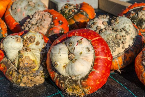 Turban squash nature fruits orange vert Photo stock © Dar1930