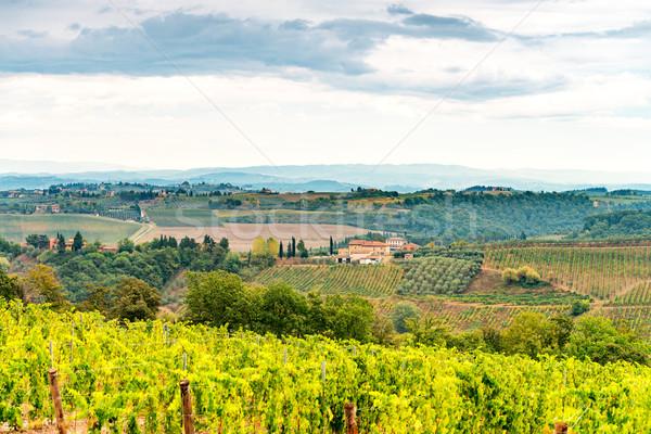 vineyards in Tuscany Stock photo © Dar1930