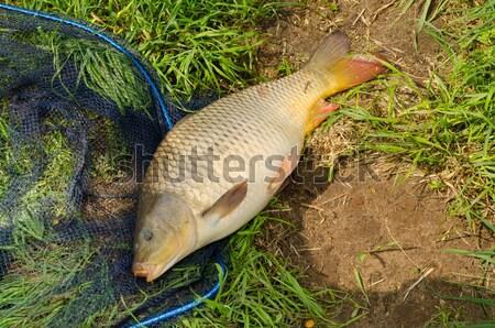 Carpa água doce peixe grama homem natureza Foto stock © Dar1930