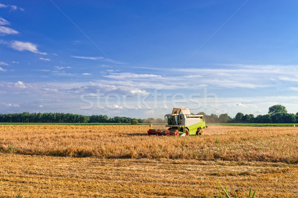 Stock photo: Tractors and harvesting