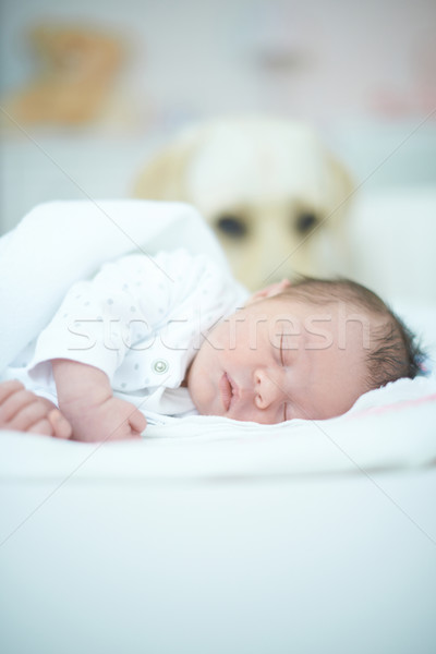 Dog Guarding Sleeping Baby Stock photo © dash