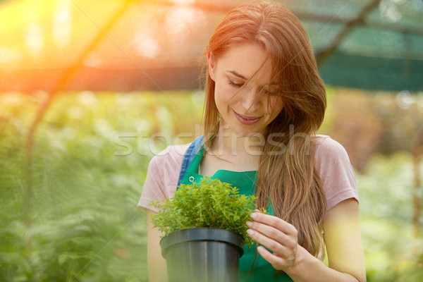 Woman with potted plant Stock photo © dash