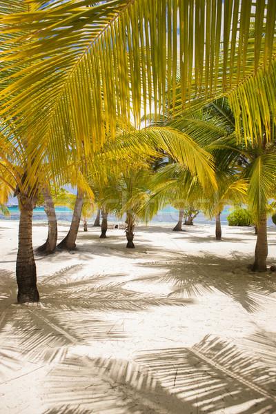 Fresh Look Palm Trees at Beach Stock photo © dash
