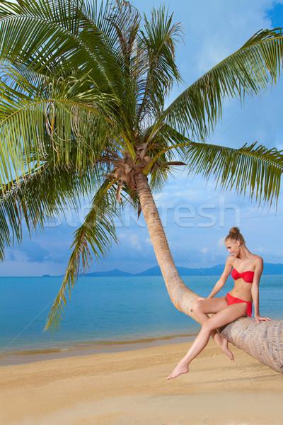 優雅な 女性 座って ヤシの木 赤 ストックフォト © dash