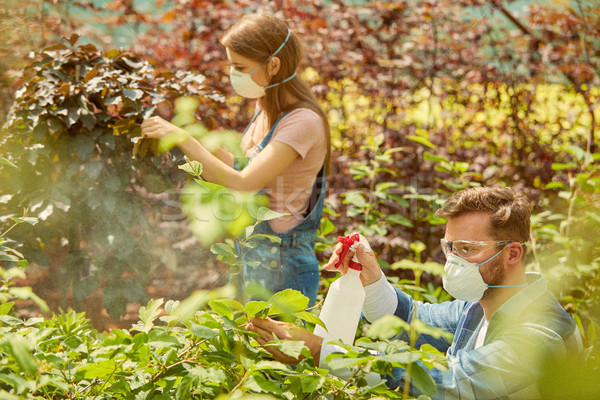 People fertilizing plants in greenhouse Stock photo © dash