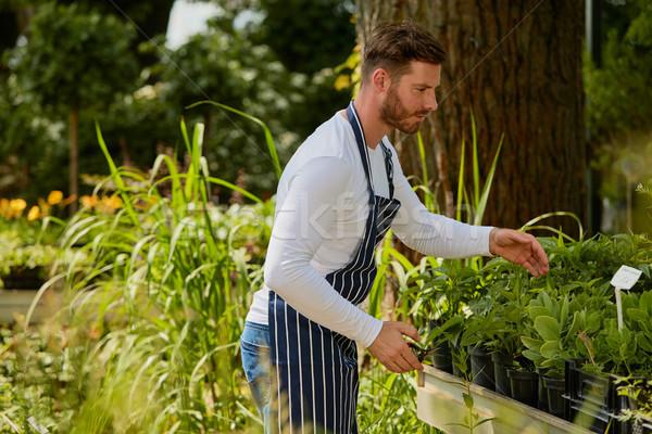 садовник рабочих растений красивый молодым человеком садоводство Сток-фото © dash