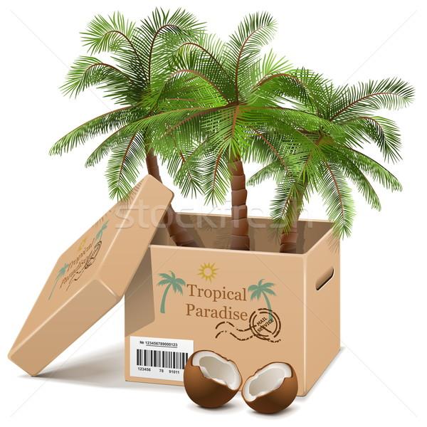 Foto stock: Vetor · palmeira · caixa · isolado · branco · natureza
