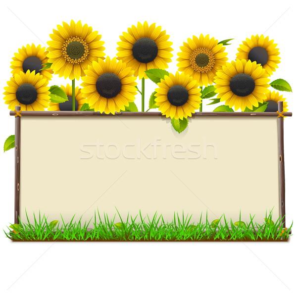 Foto stock: Vetor · moldura · de · madeira · girassóis · isolado · branco · flores
