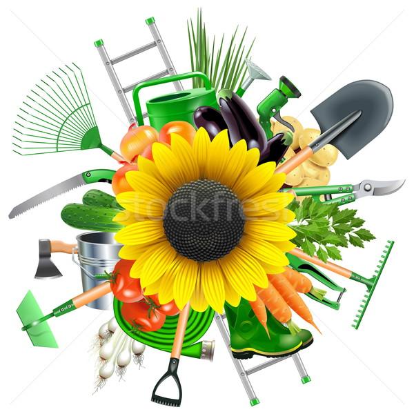 Vector tuin zonnebloem geïsoleerd witte Stockfoto © dashadima