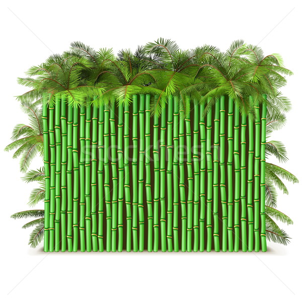 Stok fotoğraf: Vektör · yeşil · bambu · çit · palmiye · yalıtılmış