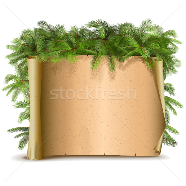 Vector Paper Scroll with Palm Stock photo © dashadima