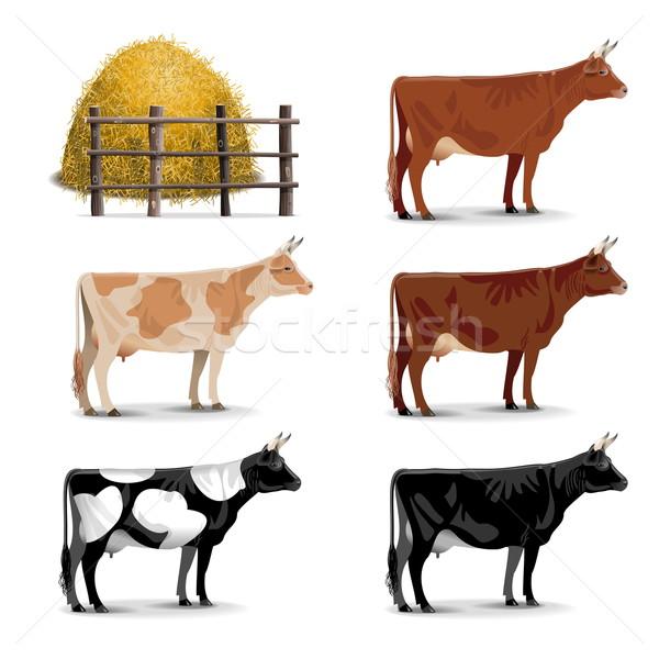 Vector Cow Icons Stock photo © dashadima