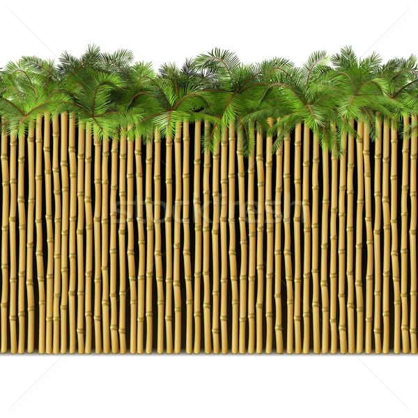 Vetor bambu fronteira palma isolado branco Foto stock © dashadima