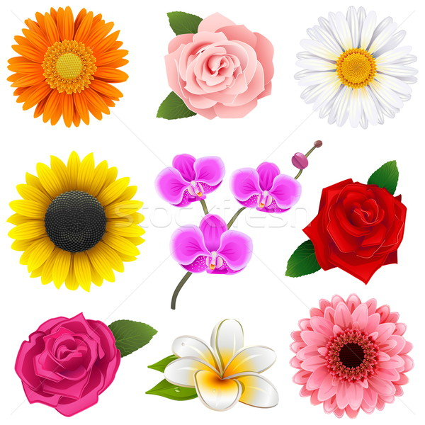 Vector Flower Icons Stock photo © dashadima