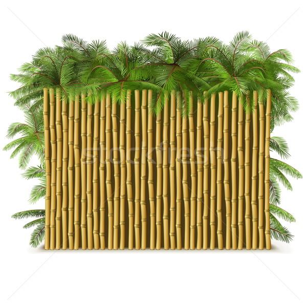 Vektor bambusz kerítés pálma izolált fehér Stock fotó © dashadima