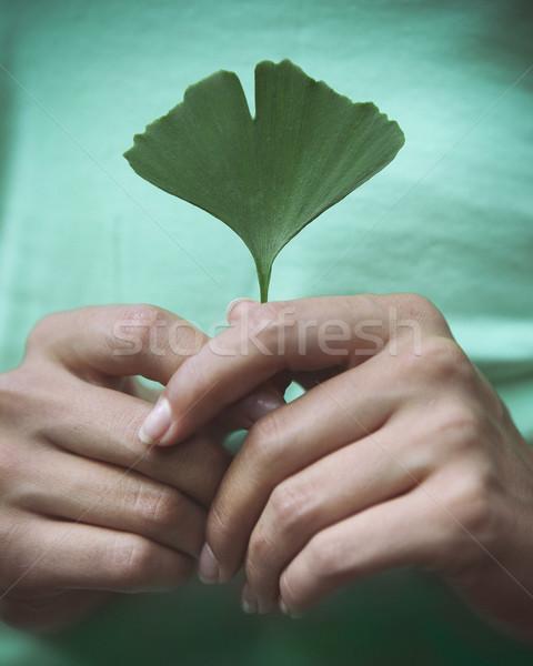 Mulher folha mãos natureza Foto stock © dashapetrenko