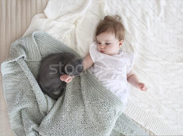 Stock fotó: Közelkép · portré · gyönyörű · baba · kiscica · felső