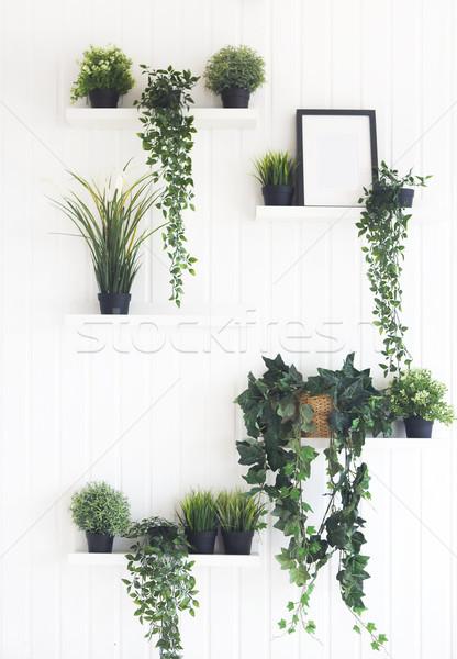 Zielone roślin półki biały ściany pokój Zdjęcia stock © dashapetrenko