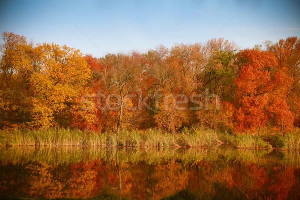 明るい 色 秋 公園 湖 風景 ストックフォト © dashapetrenko