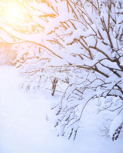 Snow footpath, trees in the snow  Stock photo © dashapetrenko