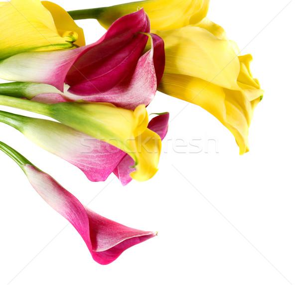 Bunch of yellow and pink cala lilies Stock photo © dashapetrenko