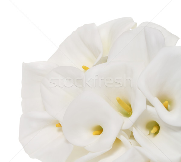 Bunch of Cala Lilies in high key Stock photo © dashapetrenko