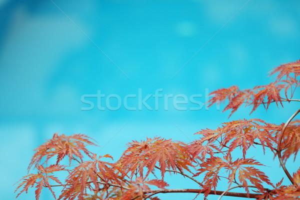 Blue pool Stock photo © dashapetrenko
