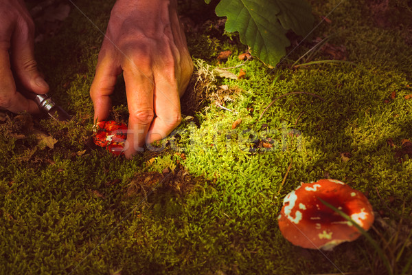 Man cuts a mushroom in the forest Stock photo © dashapetrenko