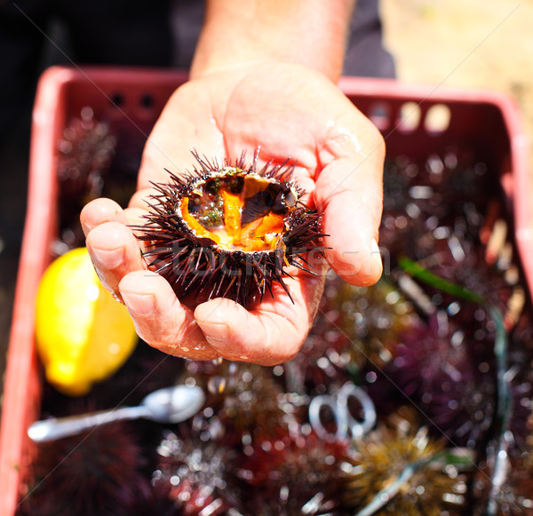 Stock photo: Man holding a sea urchin with lemon for eating it