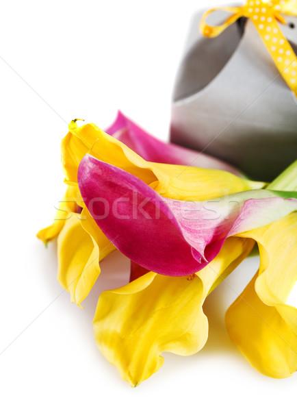 Yellow and pink cala lilies with present Stock photo © dashapetrenko