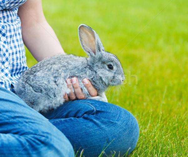 Cute peu gris lapin mains herbe verte Photo stock © dashapetrenko