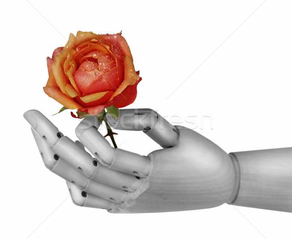 Robot hand holding rose Stock photo © dashapetrenko