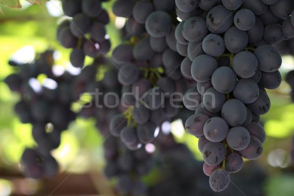 Grapes Stock photo © dashapetrenko