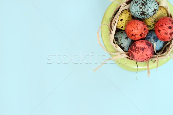 Ovos azul espaço texto grama pássaro Foto stock © dashapetrenko